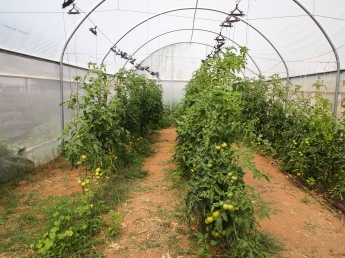Greenhouse at the Farm School