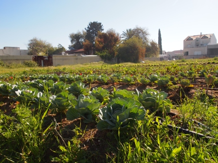 Crops and drip irrigation system at the Farm School